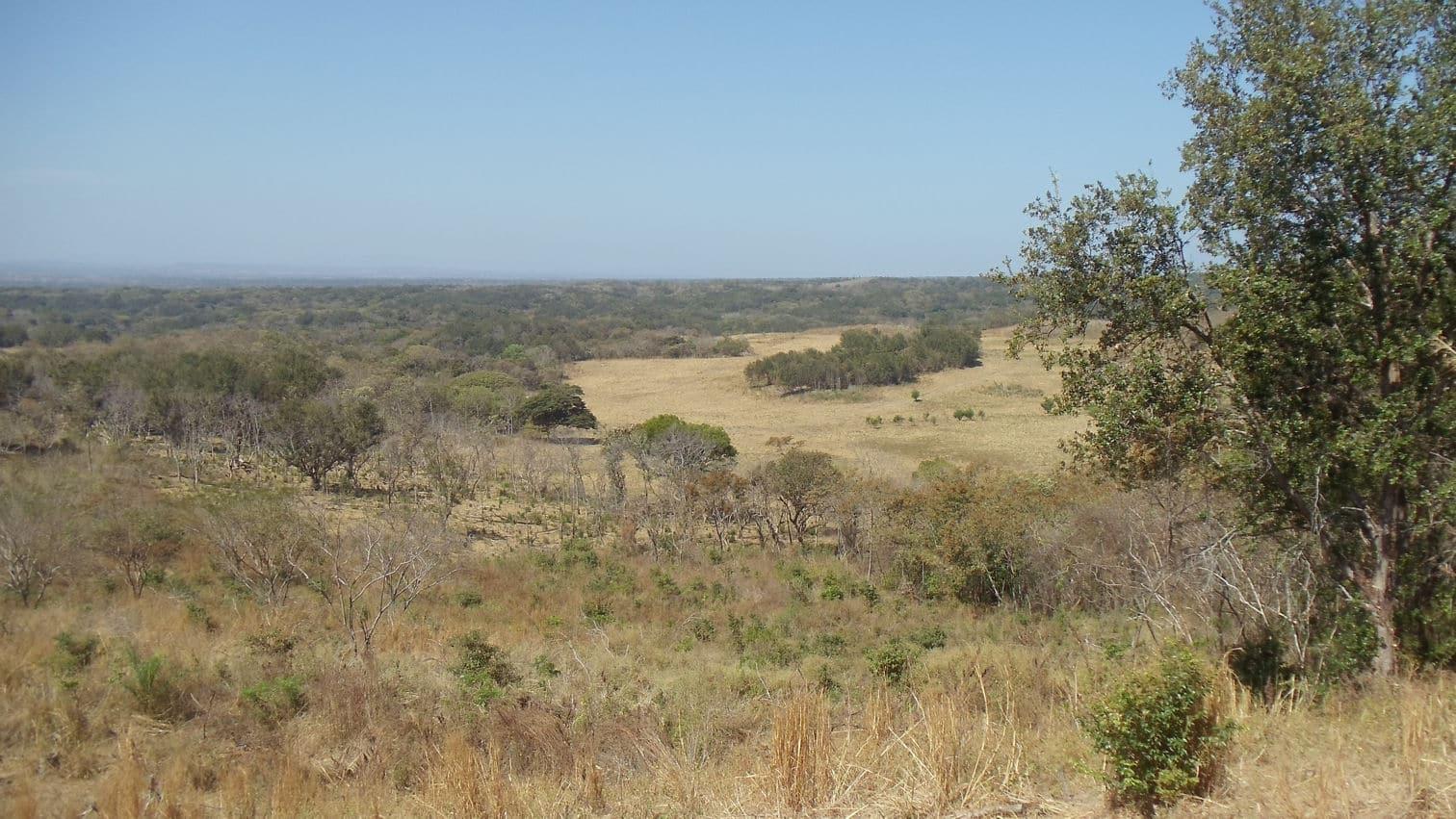 Farm of 395 hectares - San Isidro 18